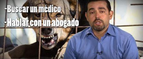 ¿Qué Hacer Si Te Muerde Un Perro?