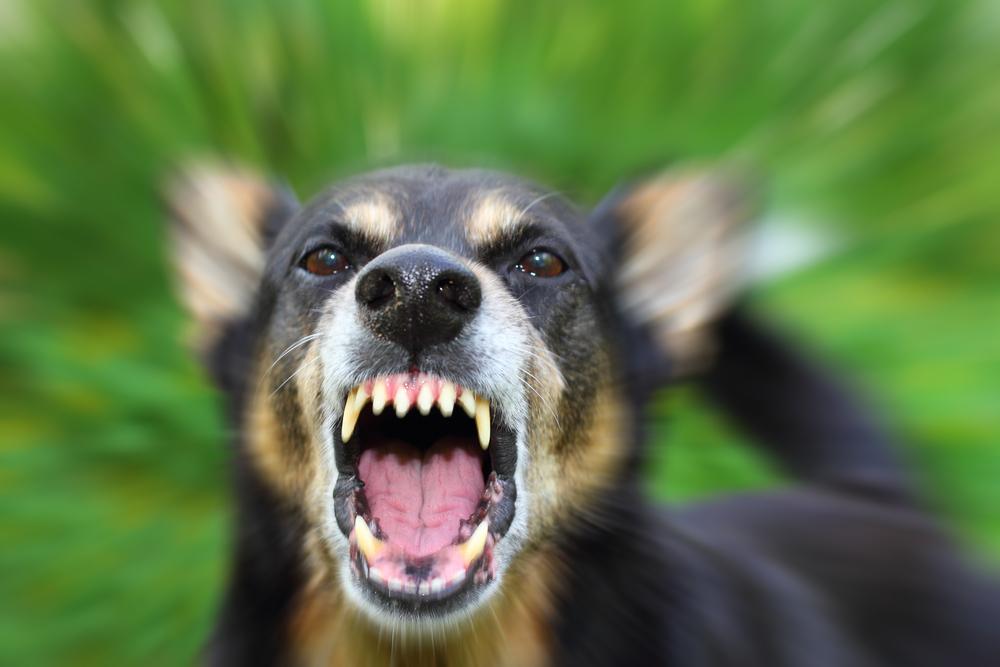 La Mordida de Su Perro le Podría Costar Mucho Dinero